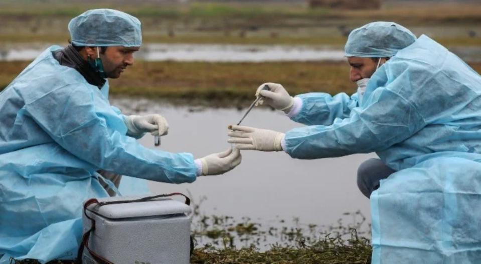 Adarsh Maharashtra   बर्ड फ्लूचा धोका वाढला,देशातील ७ राज्यांमध्ये संसर्ग झाल्याचं स्पष्ट
