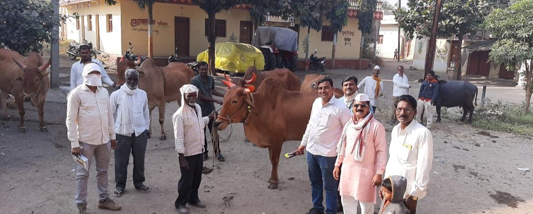 Adarsh Maharashtra | संगम येथे पशुसंवर्धन व लाळया खुरखुत रोगाचे लसीकरण शिबीर संपन्न